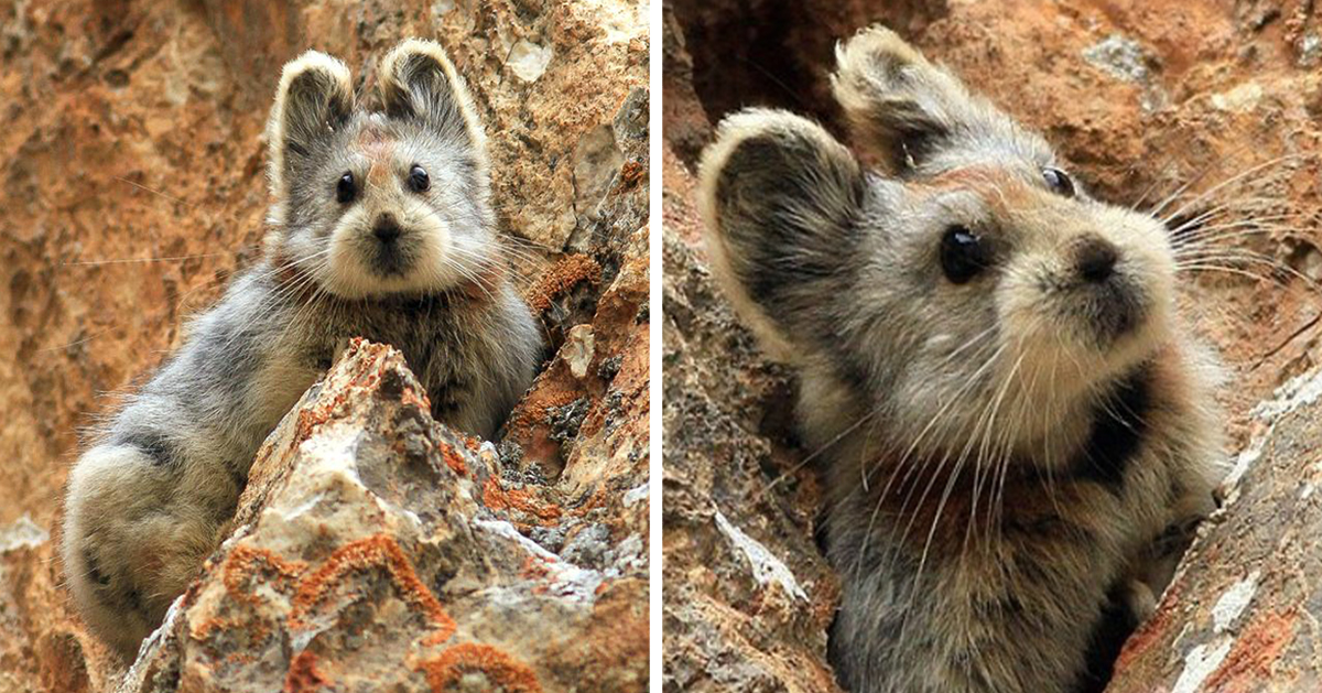 This Rare 'Magic Rabbit' Was Spotted For The First Time In