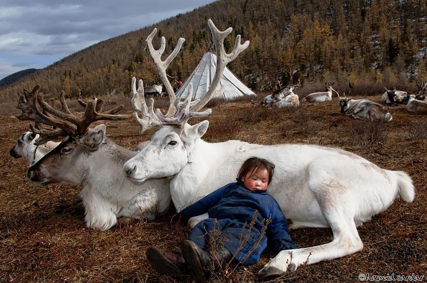 reindeer-people-hamid-sardar-afkhami-1