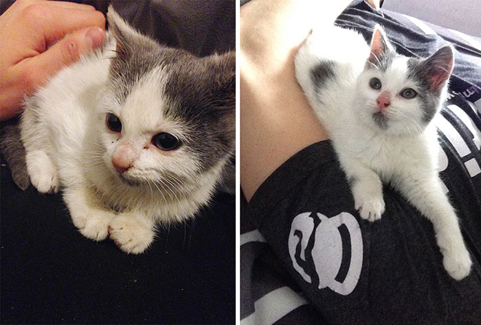 Abandoned Kitty Just Two Days After Finding A Loving Home