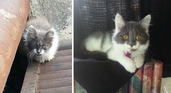 Spyder Was Found In The Drain By A Kind Guy Who Gave Her A Forever Home