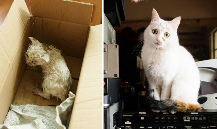 Little Kitty Was Found Drenched In The Cold Rain. Now Utopia Has A Loving Home