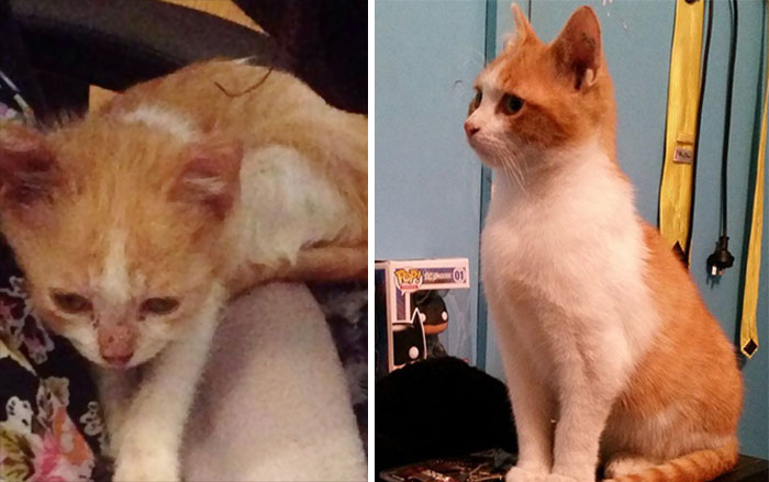 Oliver Was Rescued From Abusive Owners. Just 12 Weeks Made A Huge Difference