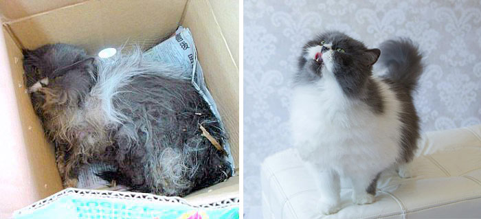 Kodama Was Found With A Maggot-Infested Wound. 6 Years Later, She Is Happier Than Ever