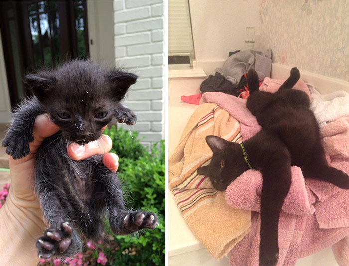 Louie Was Found Abandoned In The Gutter Just Two Weeks Old. Now He Is The King Of The House