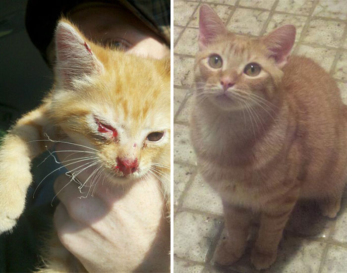 Duncan Was Found Injured In The Middle Of The Road. A Year Later He Looks Much Happier