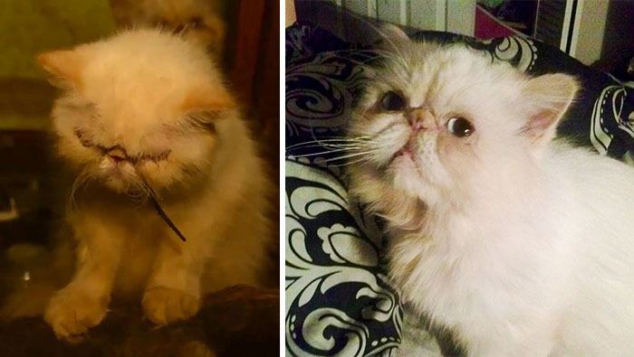 Tiny Persian Cat The Day She Was Found And In Her New Home