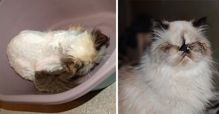 Cat Was Found Under The Stairs, Now He Looks Much Better