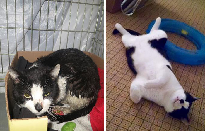 Stray Cat One Year Later