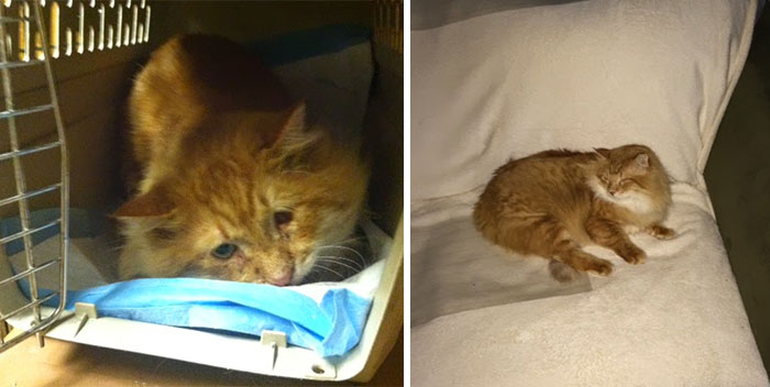 Lionel, An Injured Stray Cat Two Months After He Was Found