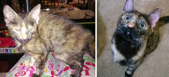 Poor Cat Was So Thin She Only Weighed 4 Pounds. Now She Is Round And Happy