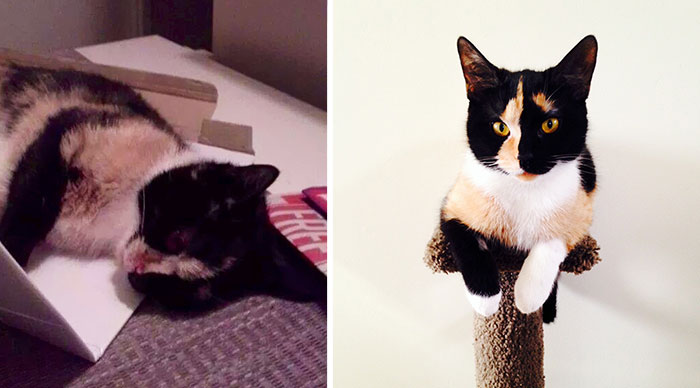 Eleanor Was Found In The Dumpster Severely Injured. Now She Is A Happy House Cat