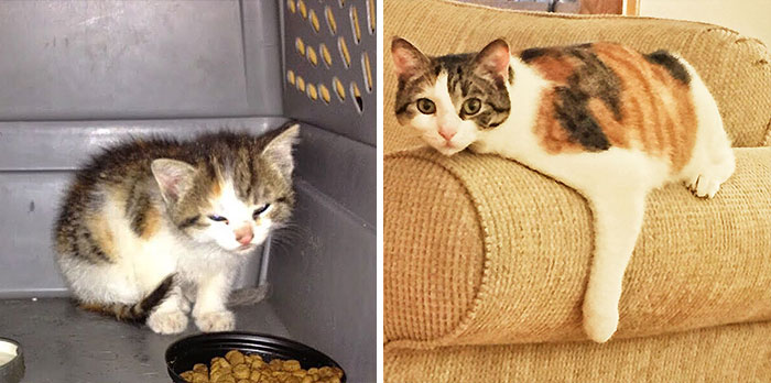 Little Kayle Was Found Inside Neighbor's Car's Wheelwell. Now She Is Happier Than Ever