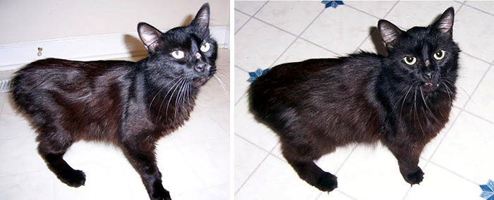 Kitty Was Abandoned After Her Owner Was Murdered, Now She Has A Loving Home