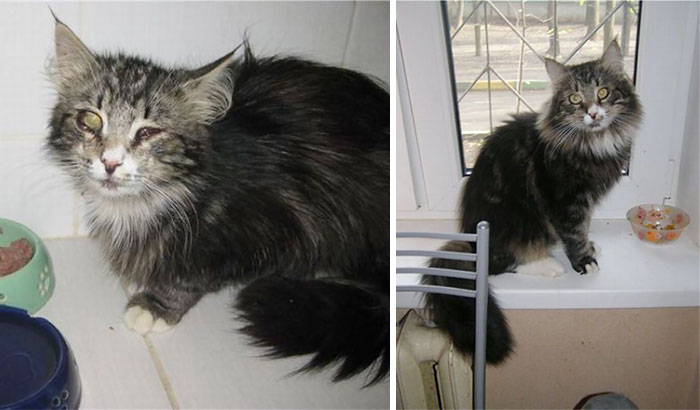 Rescued Kitty Before And After