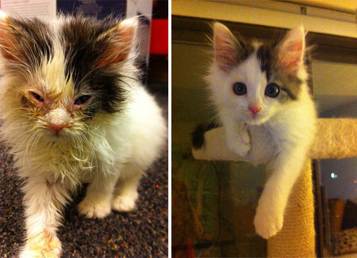 147 Powerful Before & After Pics Show How Rescue Can Change A Cat