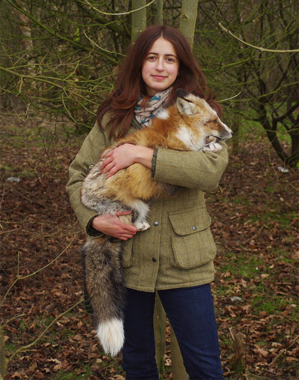 rescued-tame-pet-fox-cub-todd-emma-dsylva-6