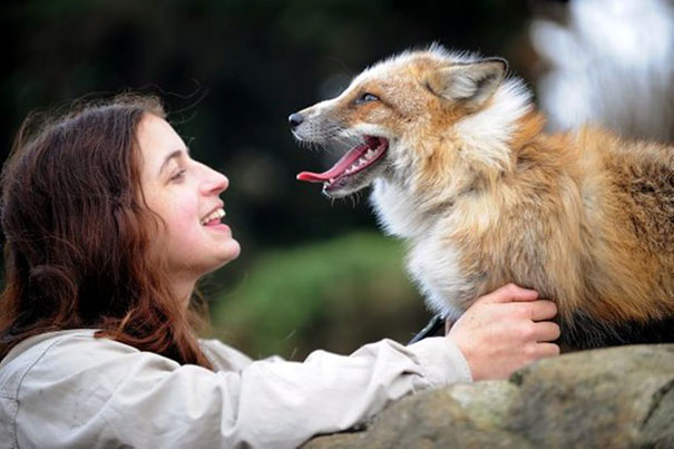 rescued-tame-pet-fox-cub-todd-emma-dsylva-8