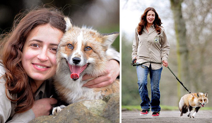 Fox Rescued And Raised By Humans Thinks He Is A Dog