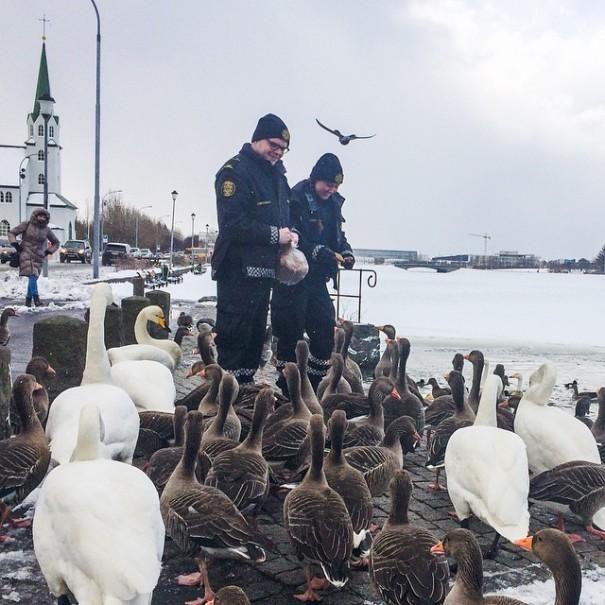 reykjavik-police-department-instagram-logreglan-iceland-5