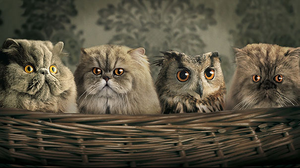 Owl Blending In With Persian Cats