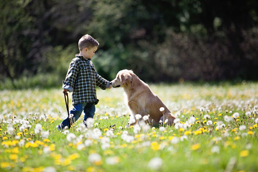 smiley-blind-therapy-dog-golden-retriever-stacey-morrison-4