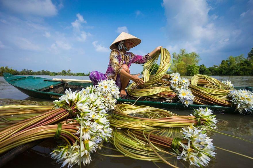 A Woman Collects Water Lilies, Chau Doc, Mekong Delta, Vietnam