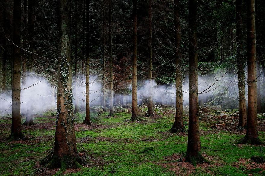 Fog Weaves Through Forest Trees, New Forest, Hampshire, United Kingdom
