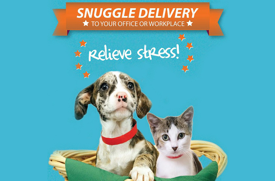 snuggle-delivery-shelter-animal-visit-workplace-humane-society-broward-county-17