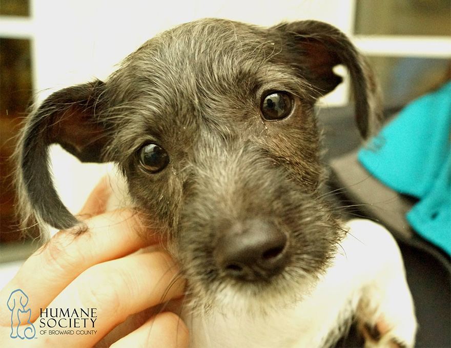 snuggle-delivery-shelter-animal-visit-workplace-humane-society-broward-county-5