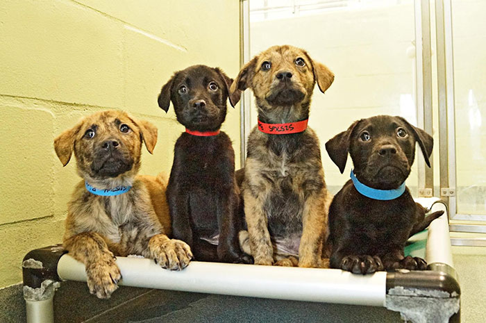This Animal Shelter Offers Pet Delivery To Offices To Reduce Stress And Help Animals Find Homes