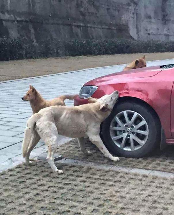 stray-dog-revenge-1