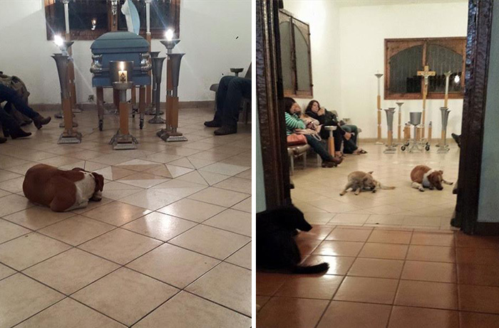 stray-dogs-pay-respects-funeral-animal-lover-margarita-suarez-yucatan-mexico-12