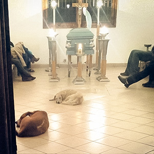 Stray Dogs Suddenly Show Up At Funeral Of Woman Who Spent Her Life Feeding Them