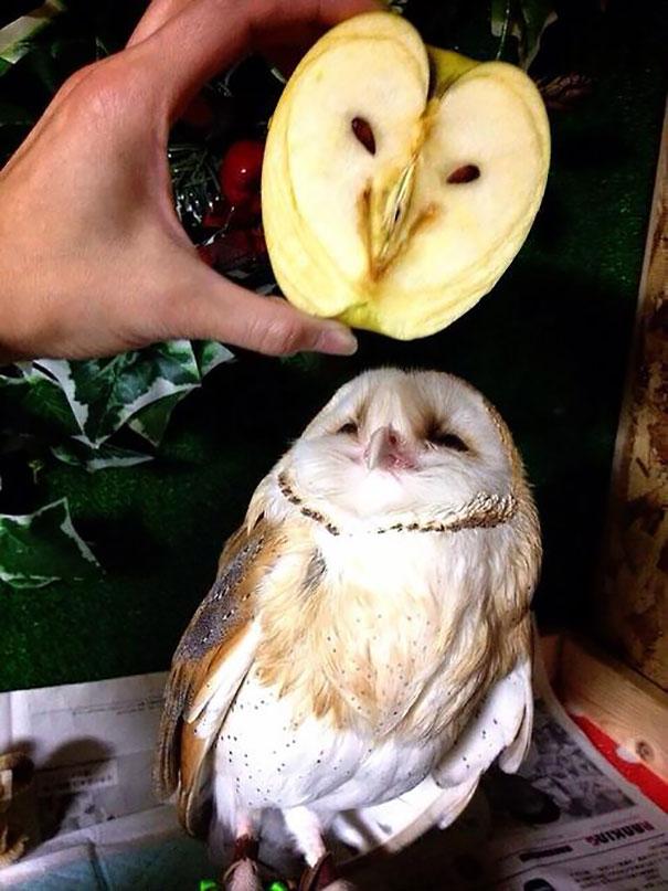 Apple Looks Like Owl