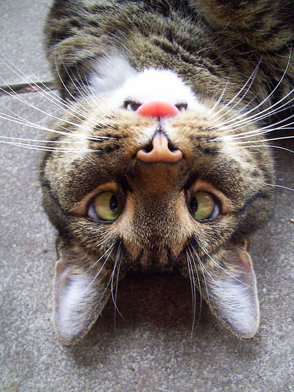 Upside Down Cat's Face Looks Like Angry Bunny
