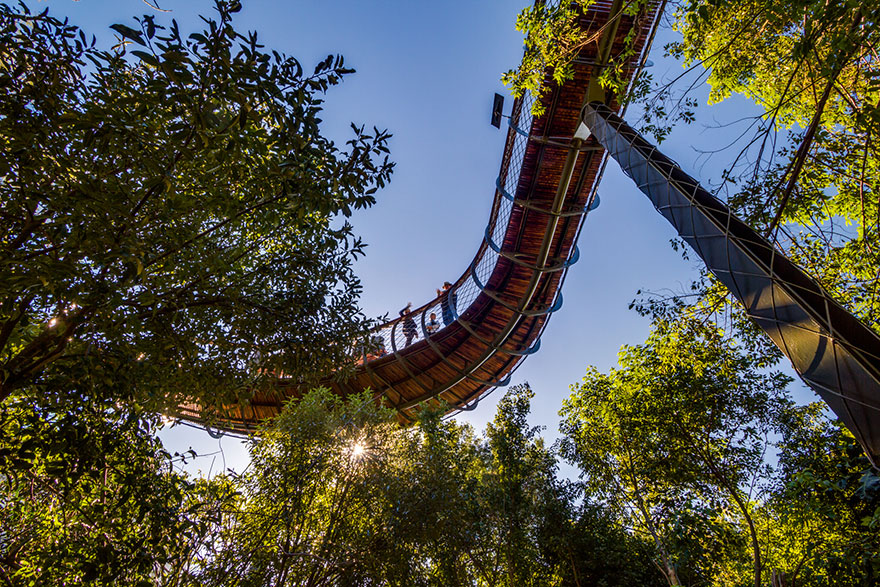 tree-copa-passagem-path-Kirstenbosch-national-botânico-jardim-14