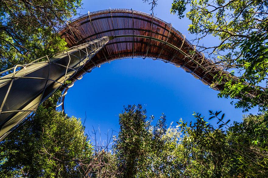 tree-copa-passagem-path-Kirstenbosch-national-botânico-jardim-15