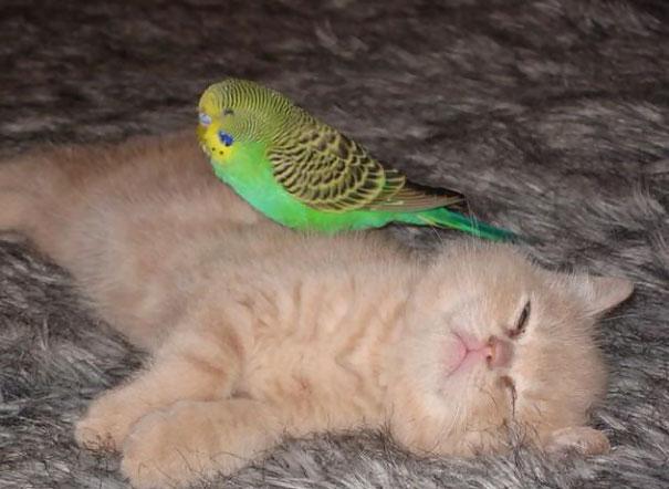 Cat And Parakeet