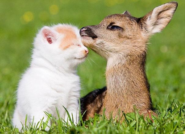 Kitty And Bambi