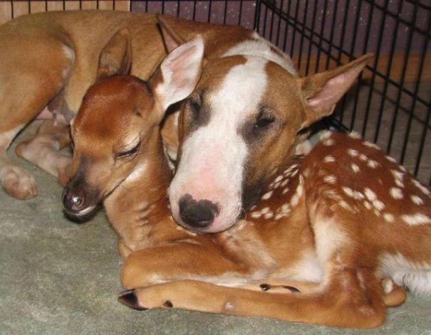 Dog And Bambi