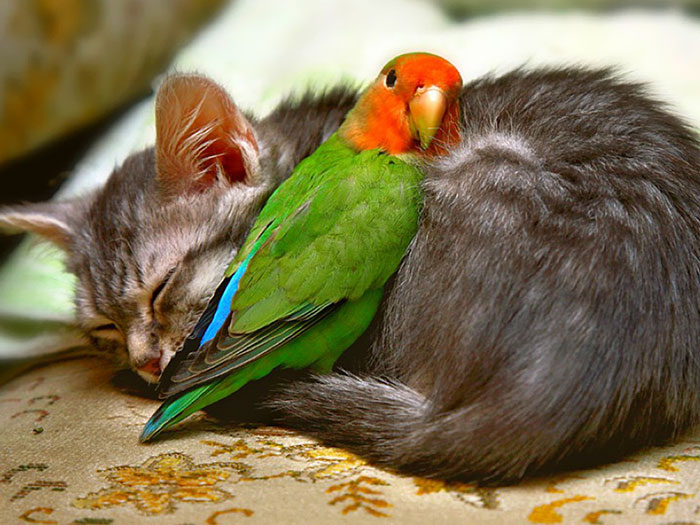78 Unlikely Sleeping Buddies That Will Melt Your Heart