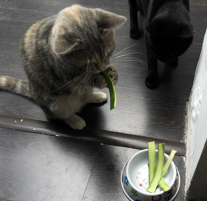 Eating Zucchini