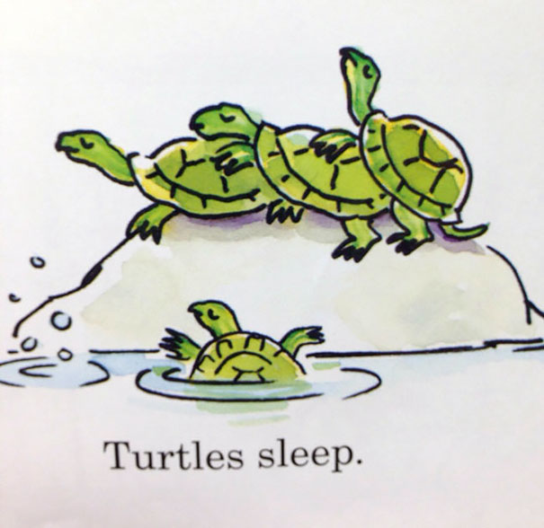 Turtles Sleep