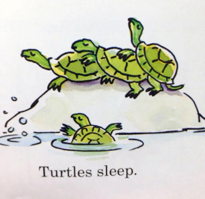 Turtles Sleep