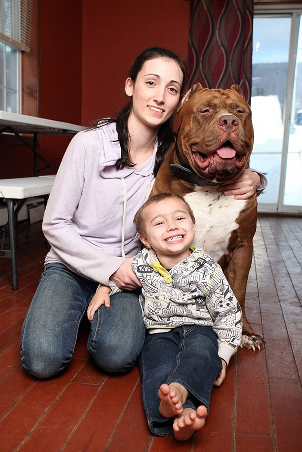 world-biggest-pitbull-the-hulk-dark-dynasty-k9-11