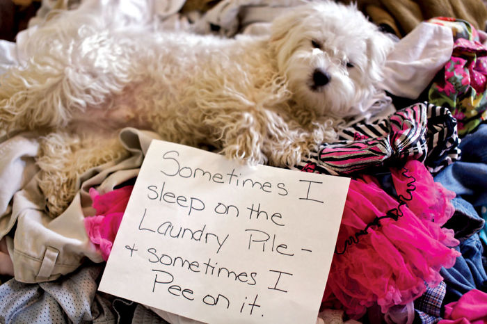 10 Ultimate Dog Shaming Pictures