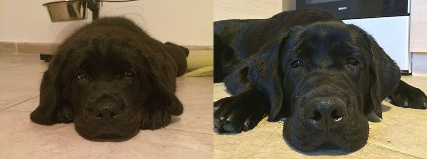 Oscar, 6 Months Later