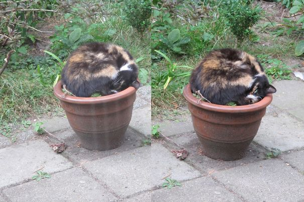 I Have A Cat Plant Too