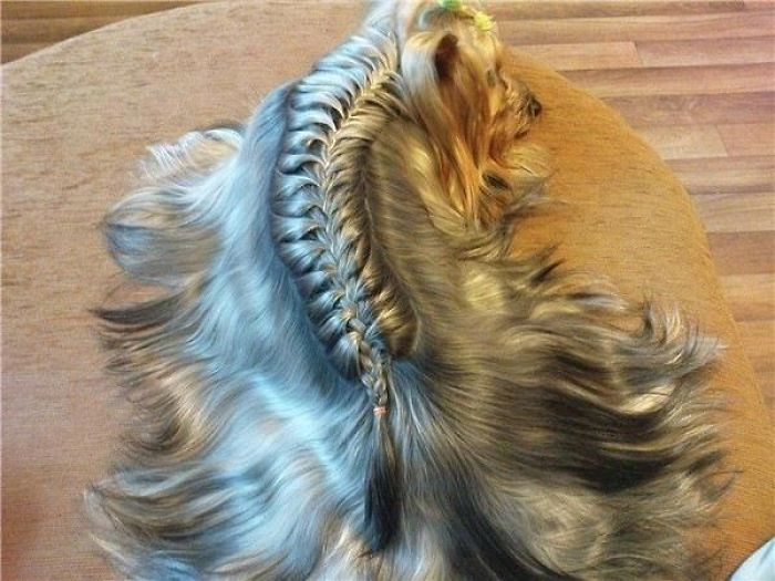 Doggy French Braid