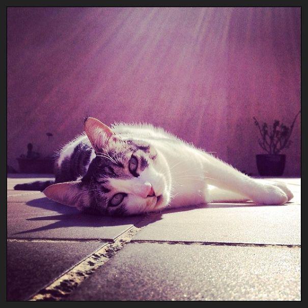 Loves The Sun!